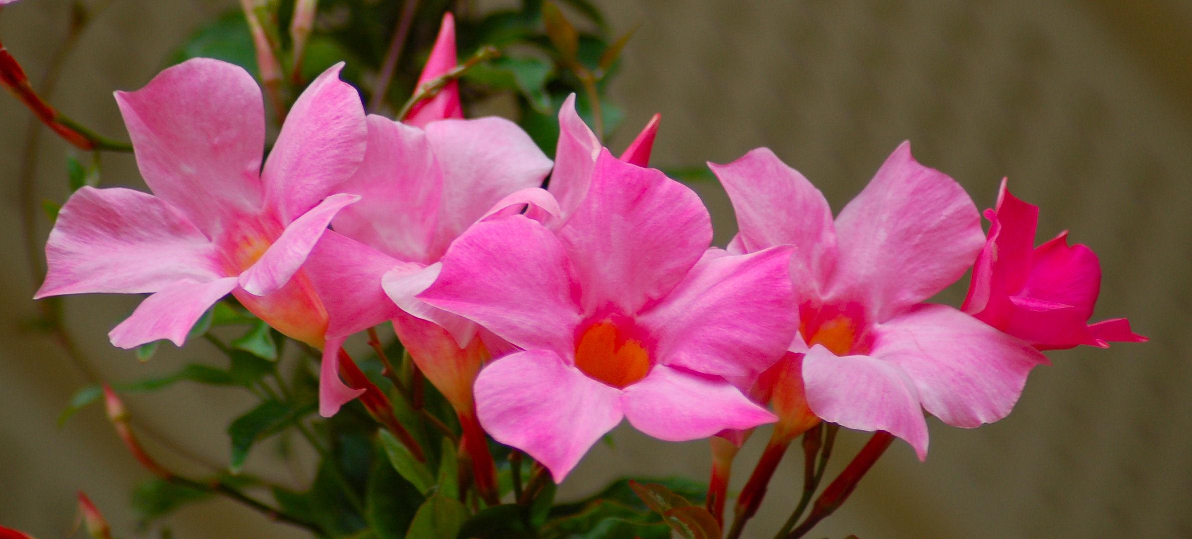 Форум цветоводов